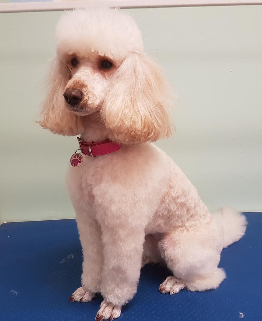 Top Dog Grooming Swindon
